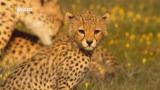 National Geographic. В великом краю Серенгети / National Geographic. The Great Serengeti (2011) HDTVRip 720p
